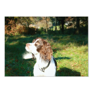 Welsh Springer Spaniel Dog Invitation