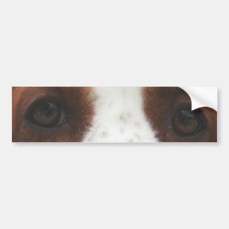 welsh springer spaniel eyes.png bumper sticker