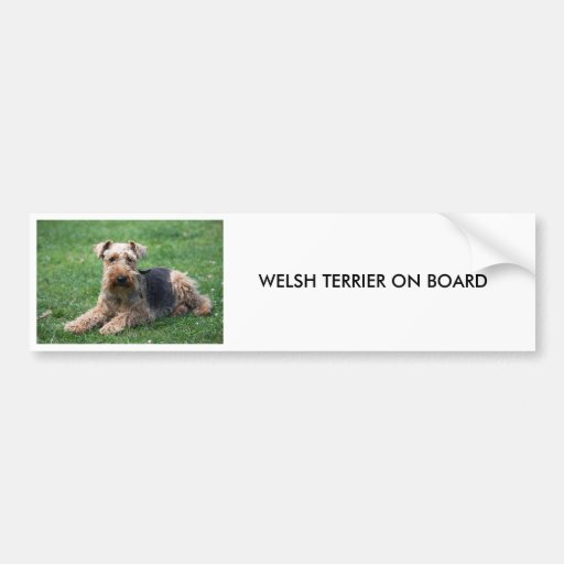 Welsh terrier dog beautiful custom bumper sticker