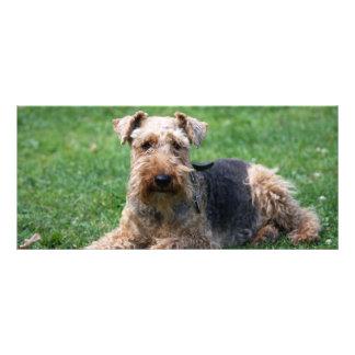 Welsh Terrier dog beautiful photo custom bookmark Custom Rack Cards