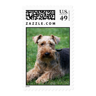 Welsh terrier dog beautiful photo postage stamp
