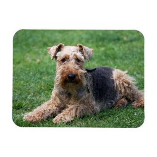 Welsh Terrier dog cute photo portrait magnet