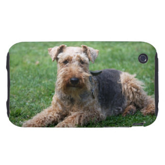 Welsh Terrier dog photo iphone 3G case mate tough