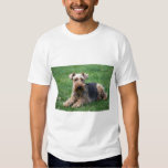 Welsh terrier dog unisex  t-shirt, gift idea t shirt
