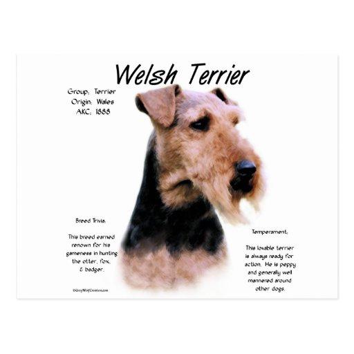 Welsh Terrier History Design Postcard