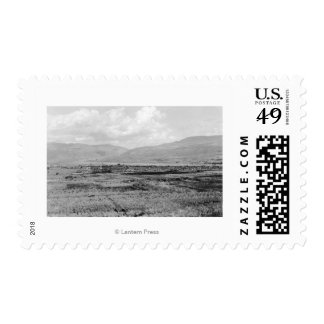 Wenatchee, WA Town View and Orchard Photograph Postage