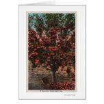 Wenatchee, WAA Wenatchee Valley Apple Tree Greeting Card