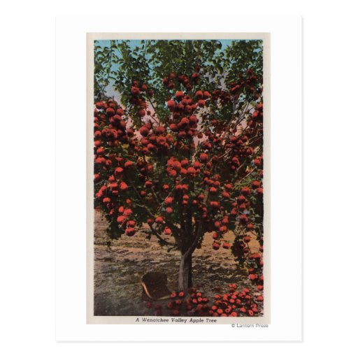 Wenatchee, WAA Wenatchee Valley Apple Tree Postcards