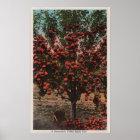 Wenatchee, WAA Wenatchee Valley Apple Tree Poster