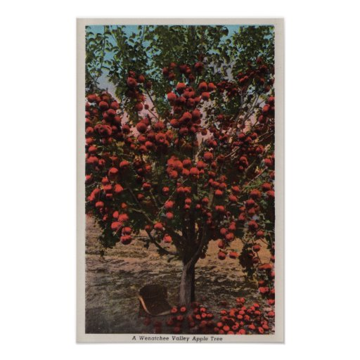 Wenatchee, WAA Wenatchee Valley Apple Tree Posters