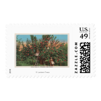Wenatchee, WAView of Apple Orchard & Workers Postage Stamp