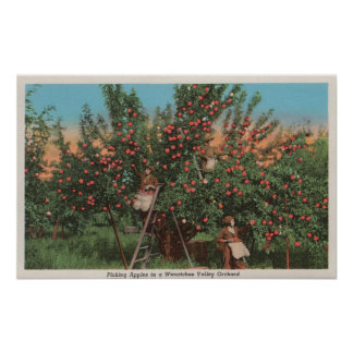 Wenatchee WAView of Apple Orchard Workers Poster