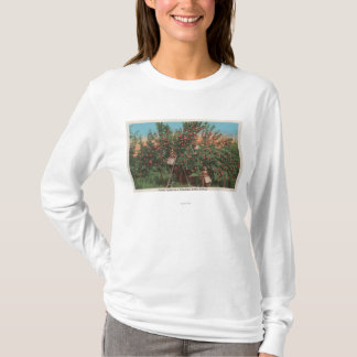 Wenatchee, WAView of Apple Orchard & Workers T-Shirt