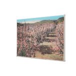 Wenatchee, WAView of Apple Trees in Blossom Canvas Print