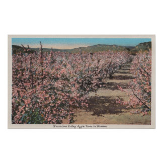 Wenatchee WAView of Apple Trees in Blossom Posters