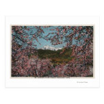 Wenatchee, WAView of Mt. Cashmere with Trees Postcard