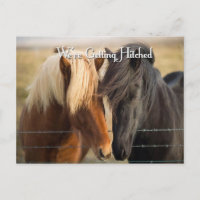 We're Getting Hitched (Two Horses) Invitation Postcard