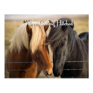 We're Getting Hitched (Two Horses) Postcard