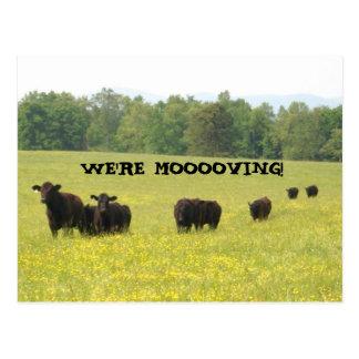 We're Moooving Postcard