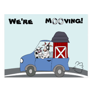 We're Moving Cow Postcard