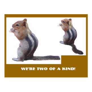 We're two of a kind! post cards