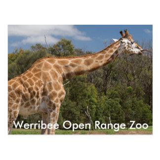 Werribee Open Range Zoo Australia Postcard