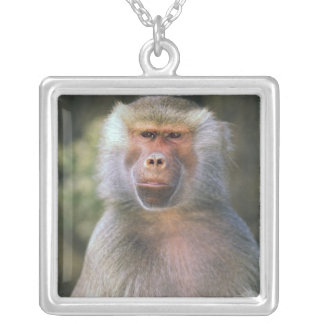 West Africa. Hamadryas baboon, or papio Silver Plated Necklace