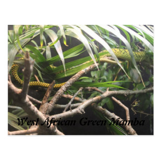 West African Green Mamba Postcard