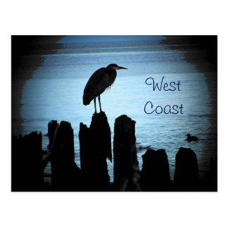 West Coast Blue Haron Postcard