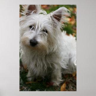 West Highland Terrier Dog Poster