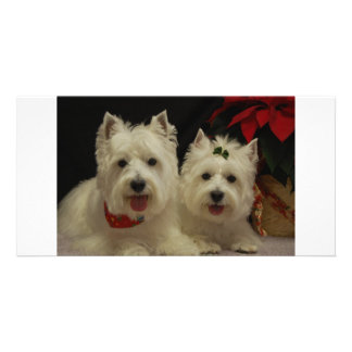 West Highland Terrier Photo Card
