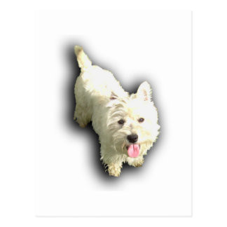 West Highland Terrier Post Cards