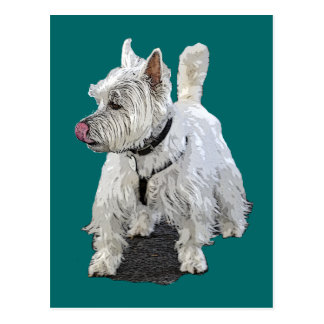 West Highland Terrier Postcard