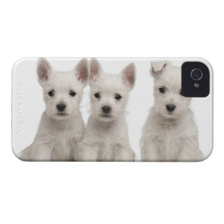 West Highland Terrier puppies (7 weeks old) iPhone 4 Cover