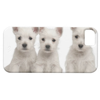 West Highland Terrier puppies (7 weeks old) iPhone SE/5/5s Case