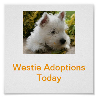 West Highland White Terrier Adoption Today Signs W Print