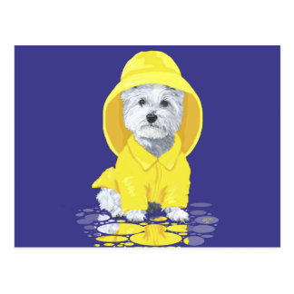 West Highland White Terrier April Showers Postcard
