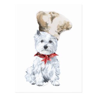 West Highland White Terrier Chef Postcard