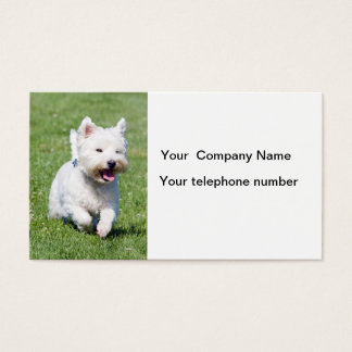 West Highland White Terrier dog business cards