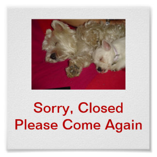 West Highland White Terrier Dog Closed Sign Poster