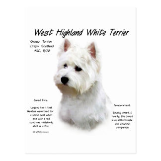 West Highland White Terrier History Design Postcard