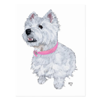 West Highland White Terrier Looking Up Post Cards