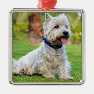 West highland white terrier Silver-Colored square decoration