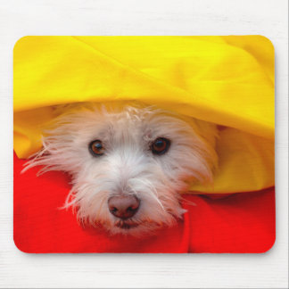 West Highland White Terrier peeking out of yellow Mouse Pad