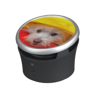 West Highland White Terrier peeking out of yellow Speaker