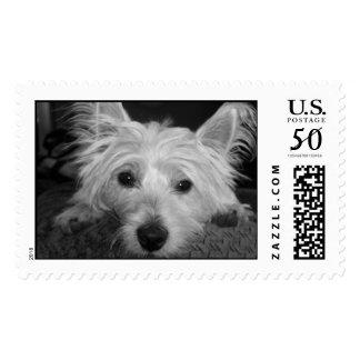 West Highland White Terrier Postage