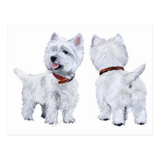 West Highland White Terrier Postcard
