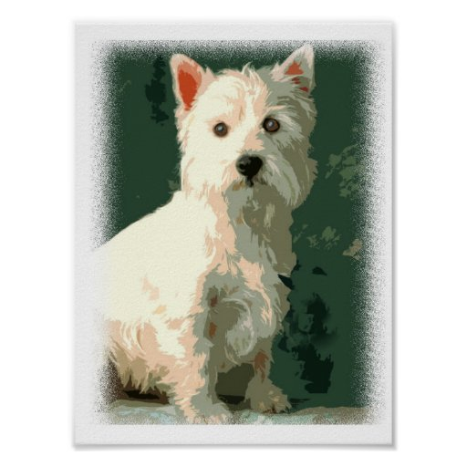 West Highland White Terrier Prints Posters