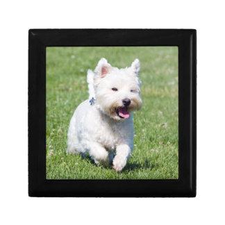West Highland White Terrier, west dog cute photo Gift Box