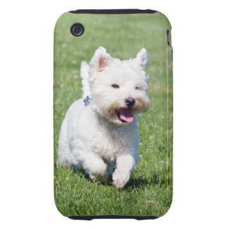 West Highland White Terrier, westie dog cute photo iPhone 3 Tough Cover